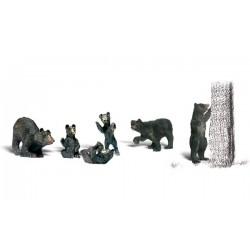 785-A2186 N Black Bears_26124