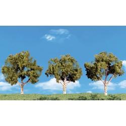 785-SP4149 Large Deciduous Trees_27651