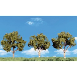 Large Deciduous Trees_27651