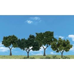Deciduous Trees_27653