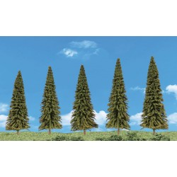 Evergreen Trees_27666