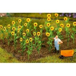 Fal-181256 HO 16 Sonnenblumen_36887