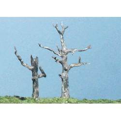 Tote Bäume (5)_3717