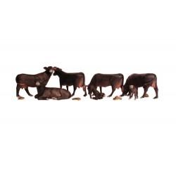 N Black Angus Cows_3945