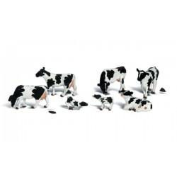 N Holstein Cows_3951