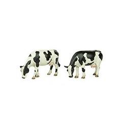 Scen-22-199 Grazing cows / Kühe am grasen (2)_39918
