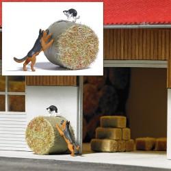HO Hund jagt Katze_67464